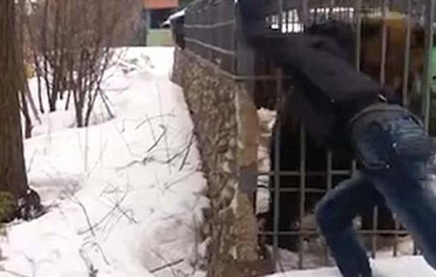 Aρκούδα έφαγε το χέρι επισκέπτη σε πάρκο στη Ρωσία!