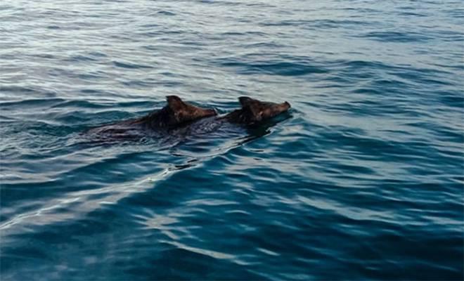 Ηλεία: Ψαράδες κοίταξαν στη θάλασσα και αυτό που Είδαν θα το θυμούνται για Πάντα! – «Νομίζαμε ότι Ονειρευόμαστε» [Βίντεο]