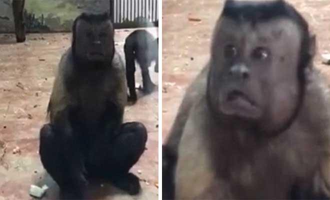 Μαϊμού με «ανθρώπινο πρόσωπο» έχει ξετρελάνει το διαδίκτυο [Βίντεο]