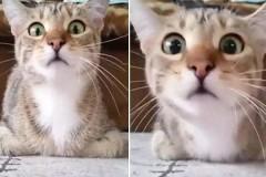 Γάτα βλέπει με προσήλωση θρίλερ και οι αντιδράσεις της δεν υπάρχουν [Βίντεο]