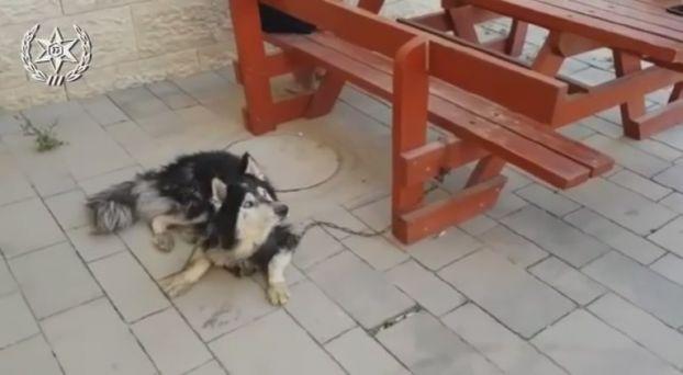 Βρήκαν σκύλο που είχε χαθεί βάζοντας το αγαπημένο του τραγούδι [φωτο+βίντεο]