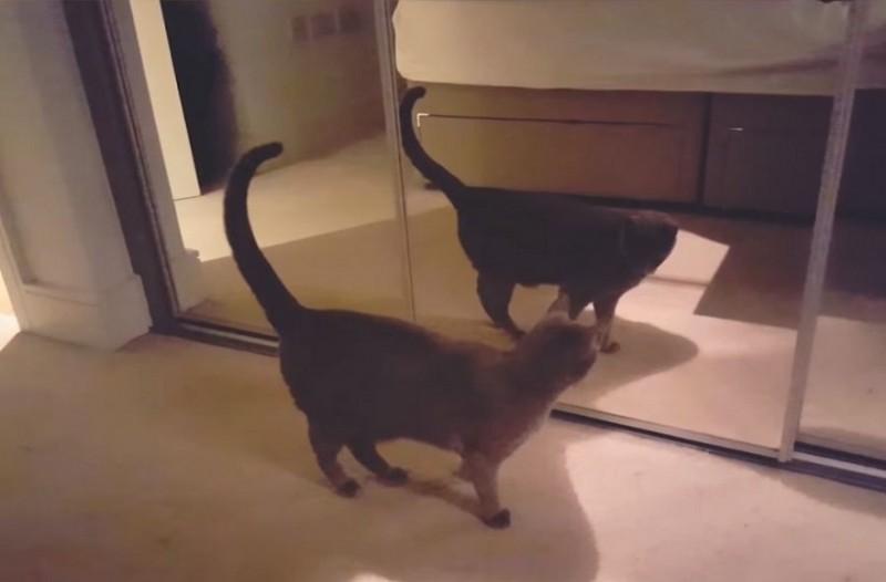 Επική αντίδραση γάτας που βλέπει για πρώτη φορά τον εαυτό της στον καθρέφτη [βίντεο]