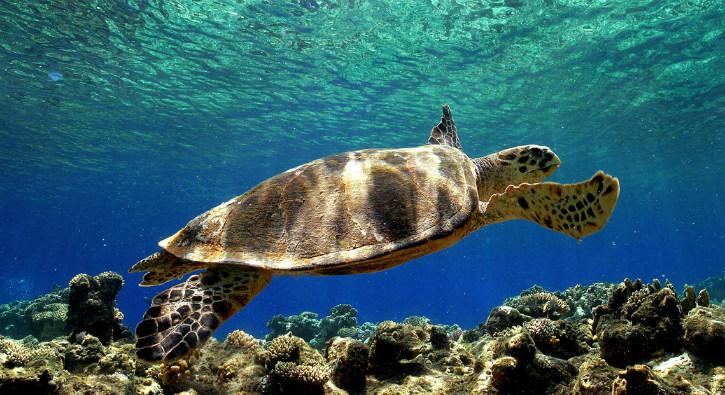 Κρήτη: Μέτρα στις παραλίες για την προστασία της Caretta-Caretta