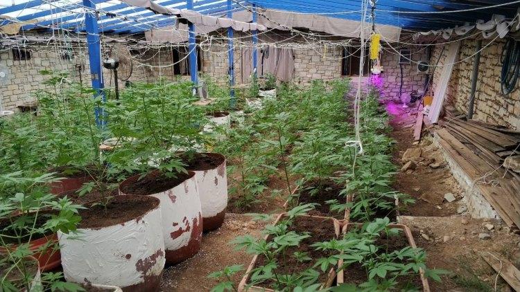 Συλλήψεις σε Λασίθι και Ρέθυμνο για καλλιέργεια και διακίνηση κάνναβης