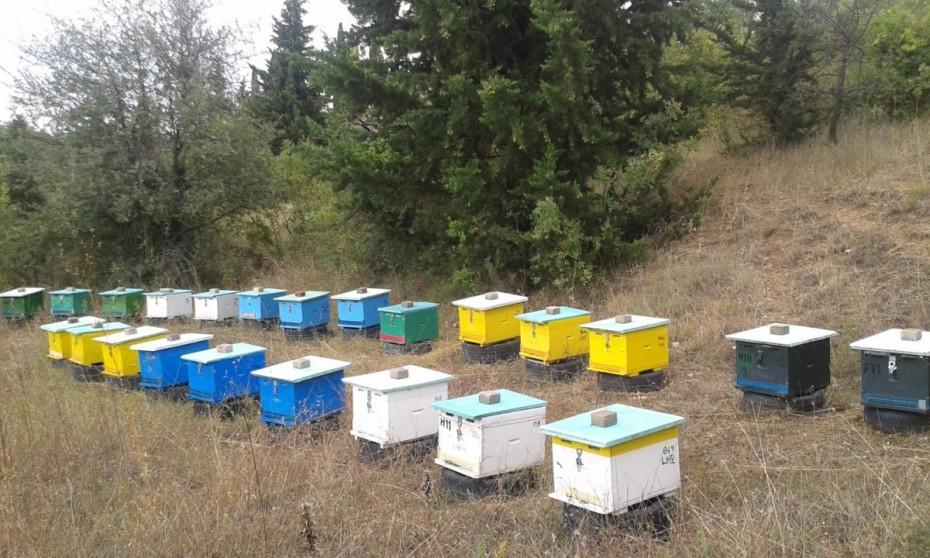 Σάμος: 70χρονος κατηγορείται για 40 κλοπές μελισσιών
