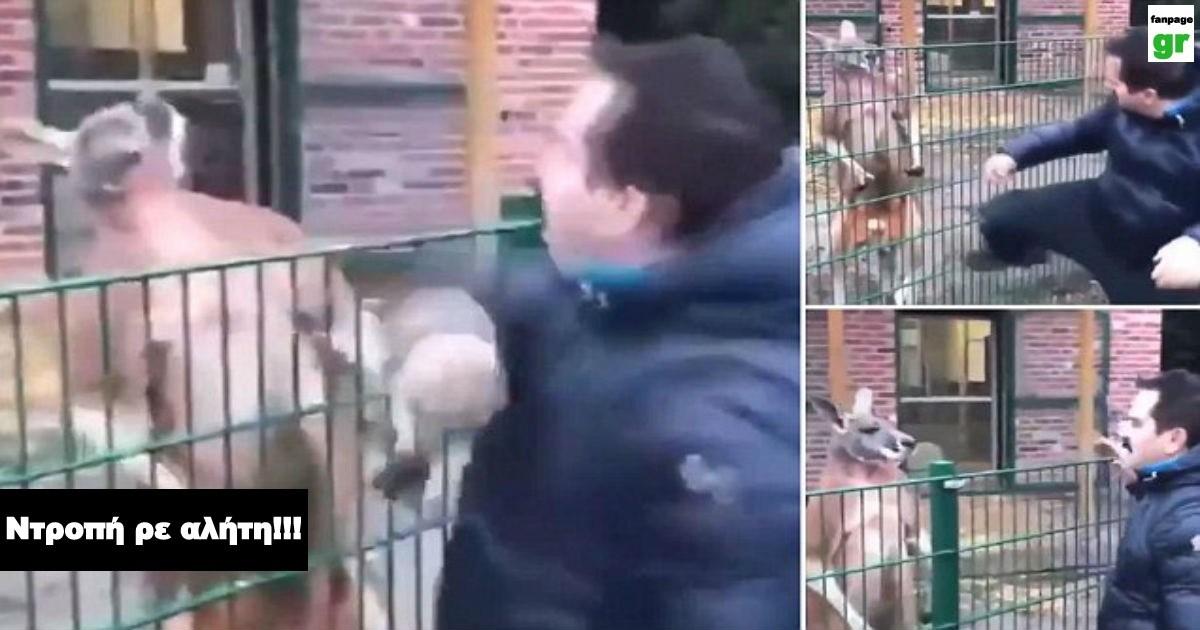 Ψευτόμαγκας Τούρκος παρουσιαστής χτυπάει καγκουρό πίσω από τα κάγκελα με μπουνιές και προκαλεί παγκόσμιο σάλο