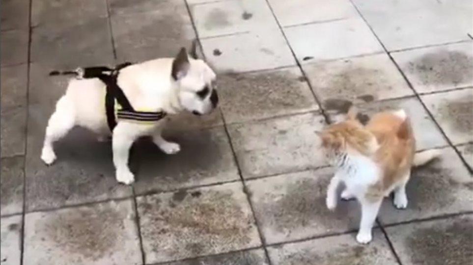 Αυτός ο σκύλος είναι σίγουρα θαυμαστής του Νεϊμάρ [βίντεο]