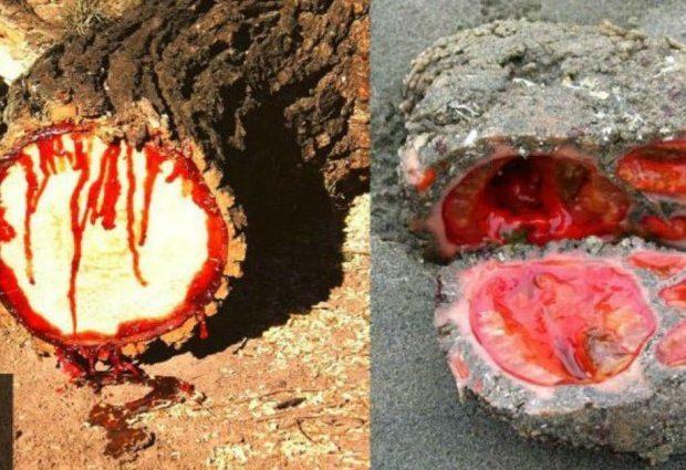 10 «Καταραμένα» Αντικείμενα που ούτε η Επιστήμη δεν Μπορεί να Εξηγήσει