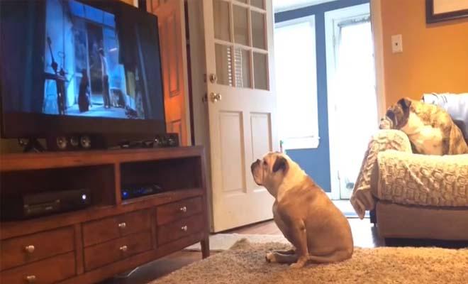 Απολαυστικό βίντεο… Απίστευτη αντίδραση σκύλου σε ταινία τρόμου!