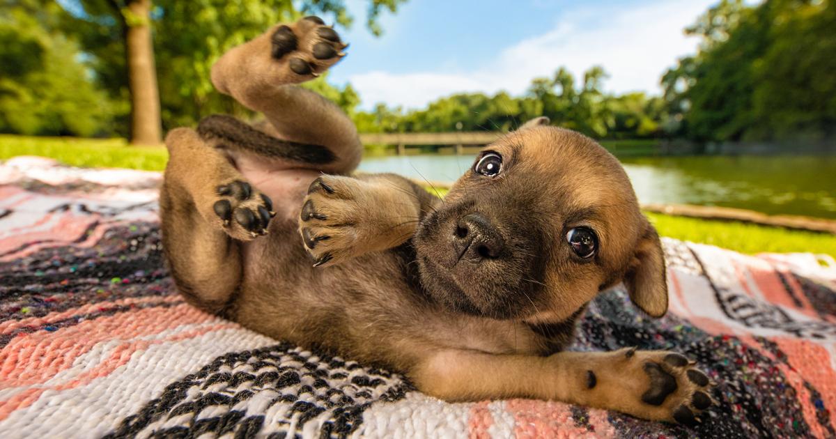 Οι φωτογραφίες που νίκησαν στο διαγωνισμό «Σκύλος της Χρονιάς 2018»
