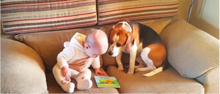 Δείτε την αντίδραση του Σκύλου Όταν οι Γονείς έφεραν το Μωρό στο Σπίτι (ΒΙΝΤΕΟ)