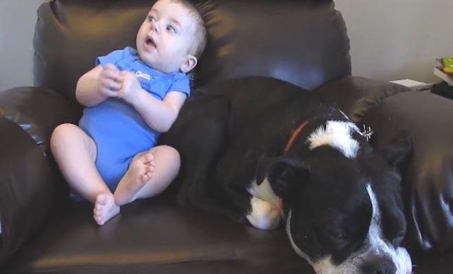 Ο μπέμπης τα κάνει πάνω του και ο σκύλος δεν μπορεί να το πιστέψει