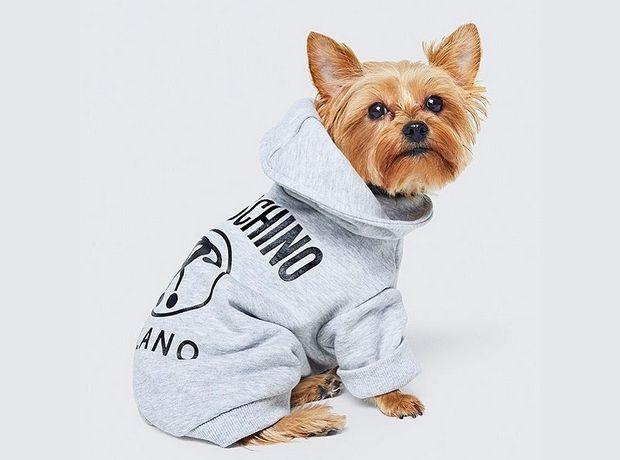 Τη συνεργασία των H&M με τον Moschino για τη σεζόν θα τη χαρείς μαζί με το κατοικίδιό σου