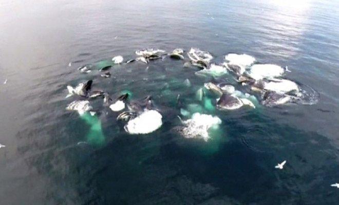 Παρατήρησαν ένα τεράστιο κύκλο να αφρίζει πάνω στη θάλασσα. Όταν είδαν τι ήταν από κάτω έμειναν έκπληκτοι… [Βίντεο]
