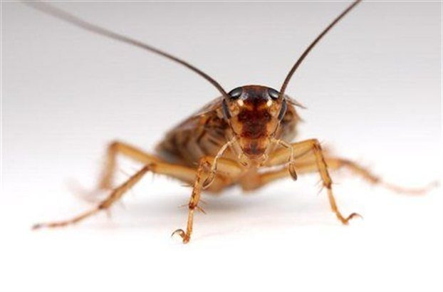 Φρίκη: Πήγε στο νοσοκομείο με έντονους πονοκεφάλους και βρήκαν μια κατσαρίδα μέσα στο κεφάλι της! (ΒΙΝΤΕΟ)
