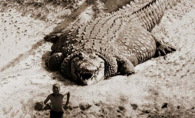 Οι 10 μεγαλύτεροι κροκόδειλοι που είδατε ποτέ [Βίντεο]