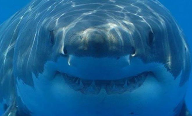 Έπιασαν καρχαρία με το καλάμι αλλά αυτό που ακολούθησε δεν μπορούσαν να το φανταστούν [Βίντεο]