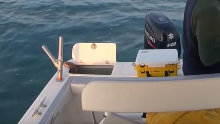 Επική απόδραση χταποδιού από σκάφος ψαράδων [βίντεο]