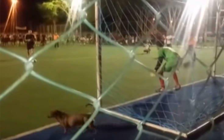 Σκύλος γίνεται τερματοφύλακας και αποκρούει πέναλτι