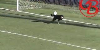 Ο σκύλος αποδείχτηκε πιο…αξιόπιστος γκολκίπερ