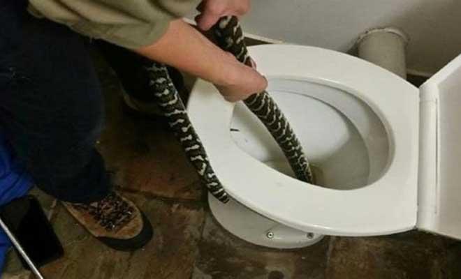 Φίδι αναδύθηκε από την τουαλέτα και δάγκωσε γυναίκα