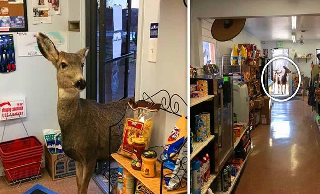 Ελαφίνα μπήκε σε μαγαζί και της έδωσαν να φάει γλυκά. Μισή ώρα αργότερα επέστρεψε με την οικογένεια της