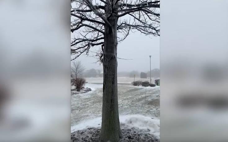 Νερό μοιάζει να τρέχει μέσα σε δέντρο