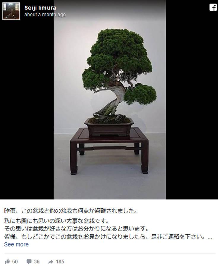 Συντετριμμένοι δύο Ιάπωνες, τους έκλεψαν επτά μπονζάι αξίας 118.000 δολαρίων
