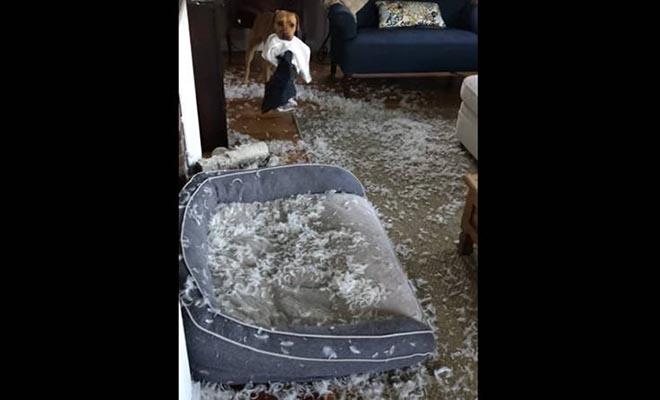 Όταν αφήνεις για λίγο μόνο του το σκύλο στο σπίτι
