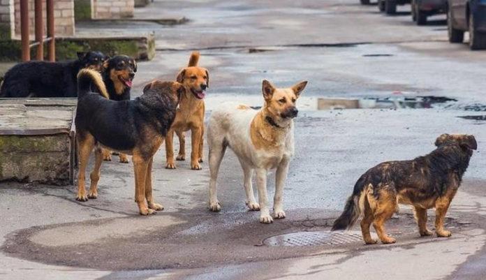 Χανιά: Αγέλη σκύλων επιτέθηκε σε 17χρονη μαθήτρια και την τραυμάτισε στο πόδι