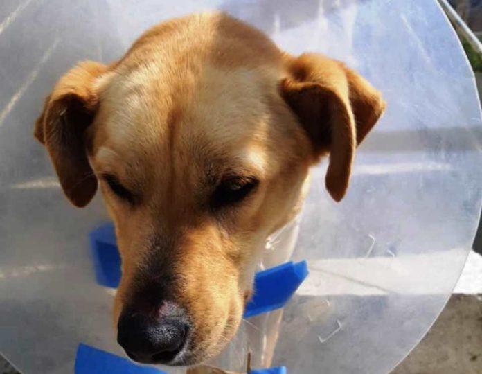 Κτηνωδία: Πυροβόλησαν σκύλο εξ΄επαφής στα Χανιά (σκληρές εικόνες)