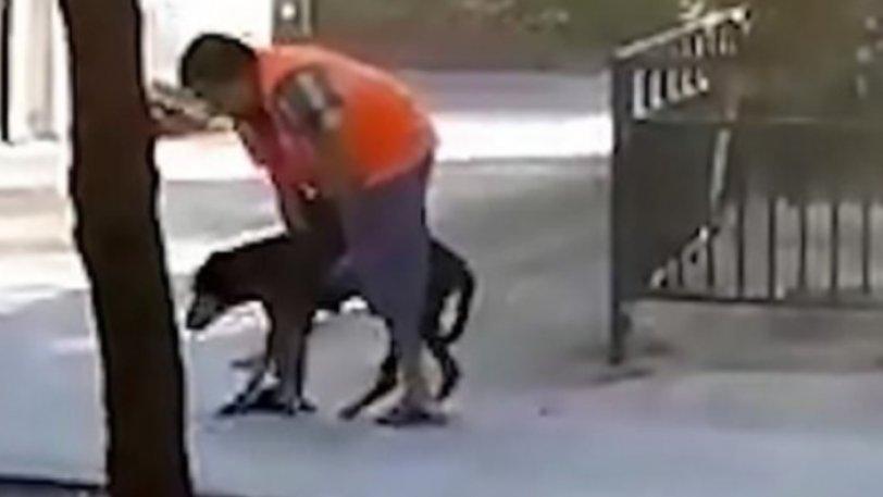 Βοηθάει τον ηλικιωμένο σκύλο του να περπατήσει – Το βίντεο που κάνει τον γύρο του διαδικτύου και ραγίζει καρδιές