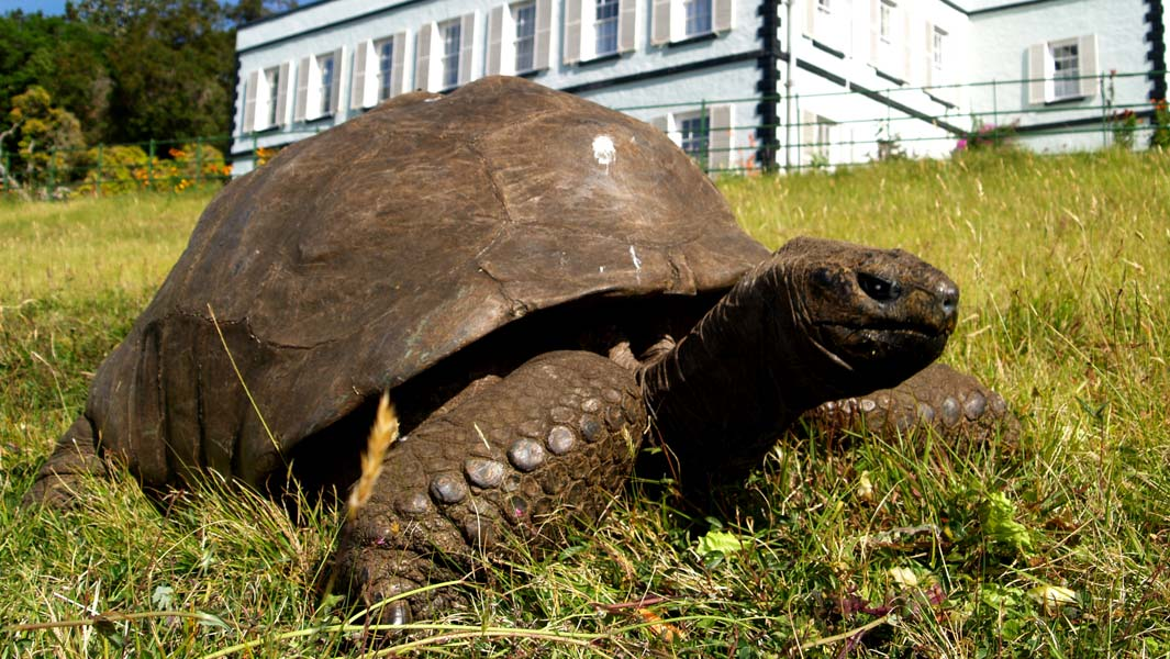 Χελώνα 187 ετών είναι το μεγαλύτερο σε ηλικία πλάσμα του κόσμου [φωτο]