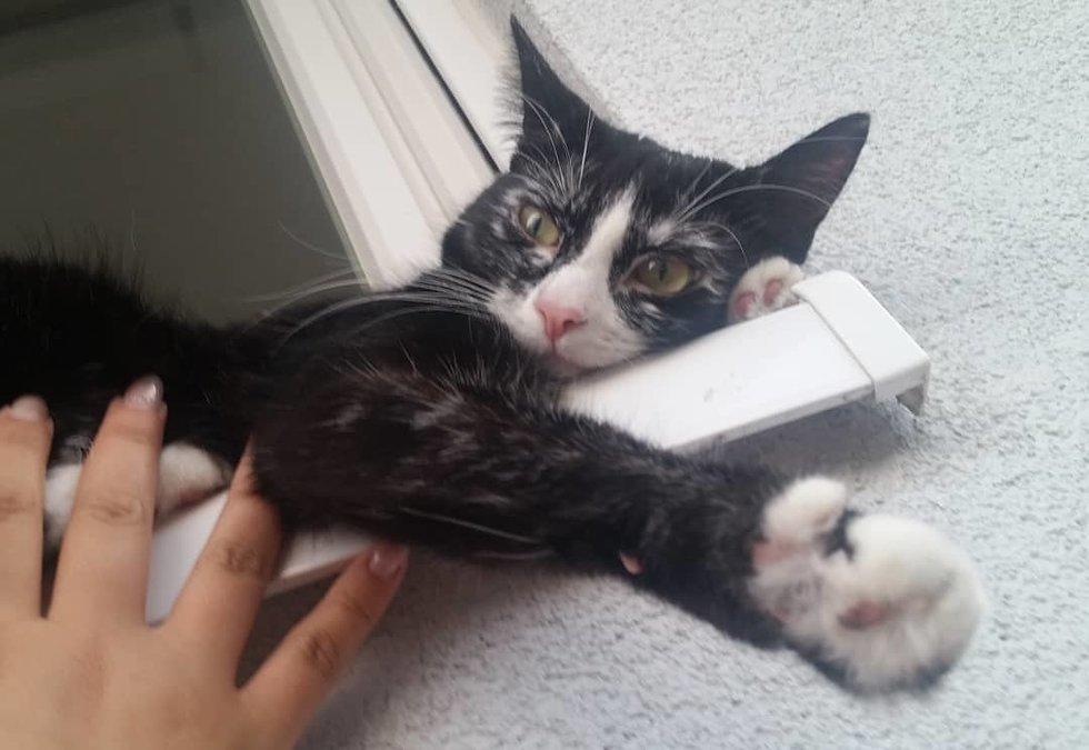 Γάτα έγινε από μαύρη… άσπρη λόγω σπάνιας δερματικής πάθησης [φωτο]