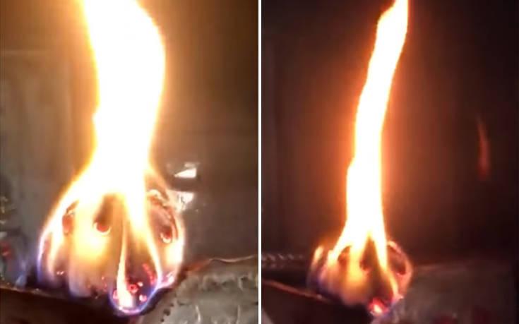 Όλοι πιστεύουν πως αυτό το κούτσουρο που καίγεται θυμίζει κάτι πάρα πολύ