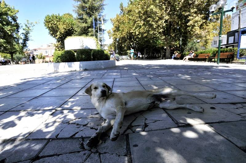 Σκύλος όρμησε σε παιδί 2,5 ετών σε ταβέρνα στον Πύργο Ηλείας
