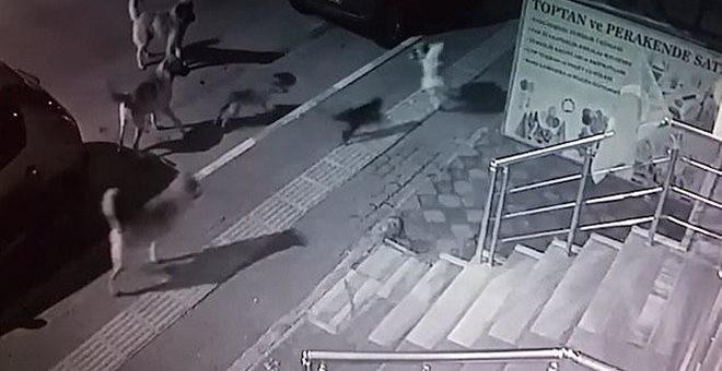 Γάτα τα βάζει με αγέλη σκύλων και τους απωθεί [βίντεο]
