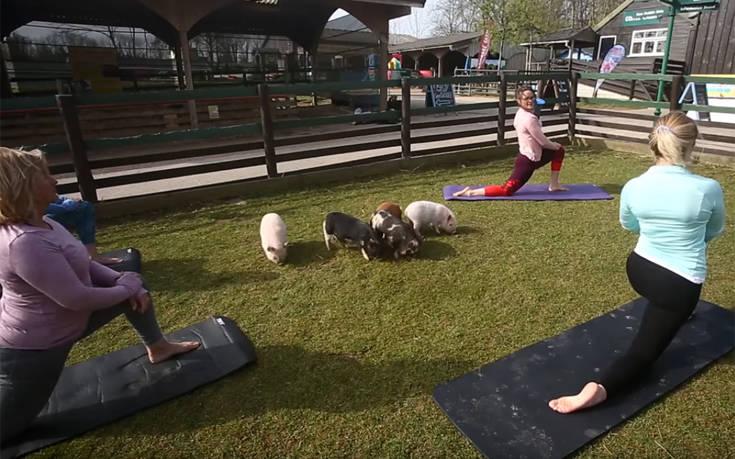 Η νέα μόδα προστάζει pilates με… γουρουνάκια