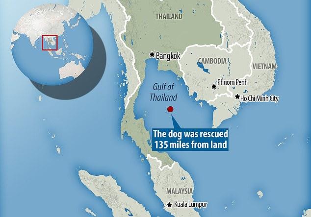 Σκύλος βρέθηκε να κολυμπάει 135 μίλια από την κοντινότερη ακτή [φωτο+βίντεο]