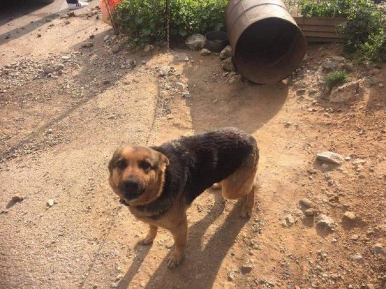 Χανιά: Συνελήφθη ιδιοκτήτης σκύλων που τους είχε δεμένους και παρατημένους