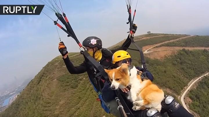 """Σκύλος κάνει """"παρά πέντε"""" παρέα με το αφεντικό του [βίντεο]"""
