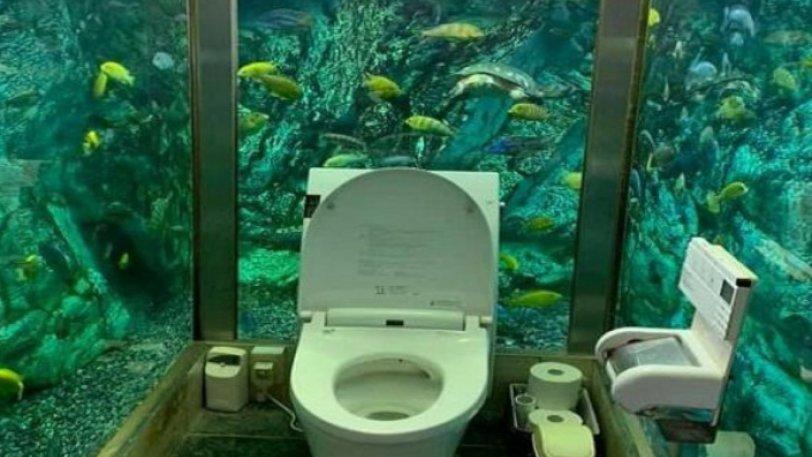 Ιδιοκτήτης καφέ ξόδεψε 250.000 ευρώ για να φτιάξει τουαλέτα μέσα σε ενυδρείο