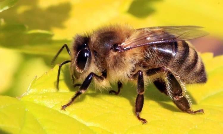 Κρήτη: Μέλισσα προκάλεσε τροχαίο ατύχημα
