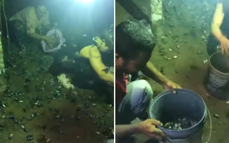 Μαζεύουν με κουβάδες τα σκαθάρια… για να τα φάνε