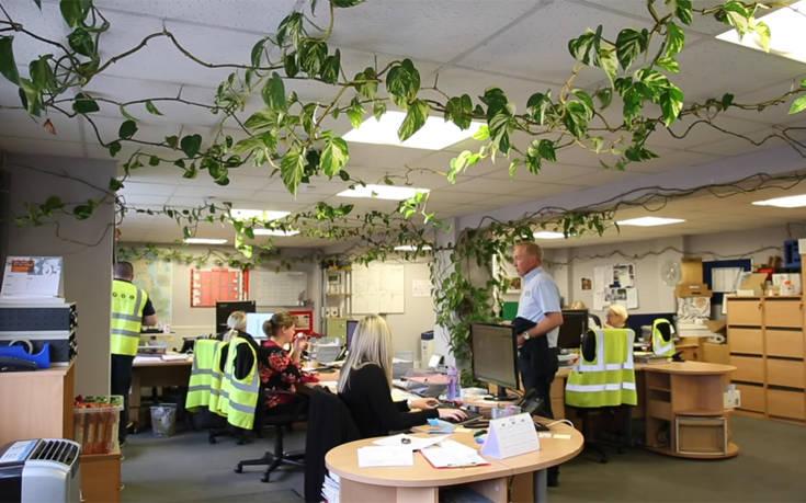 Το φυτό του γραφείου μεγάλωσε και έγινε… έτσι!
