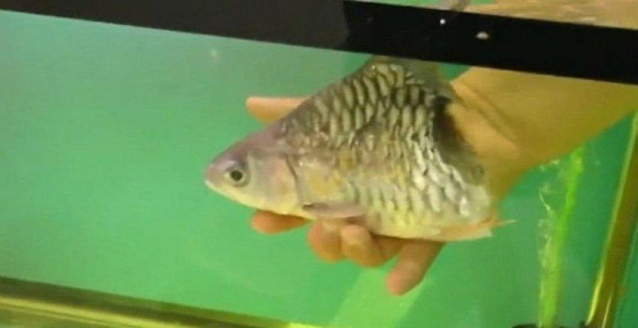 Απίστευτο: Μισό ψάρι επιβίωσε για έξι μήνες! (βίντεο)