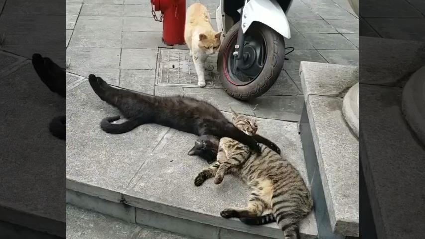 """Γάτα έπιασε τον γάτο της """"στα πράσα"""" με την ερωμένη του [βίντεο]"""