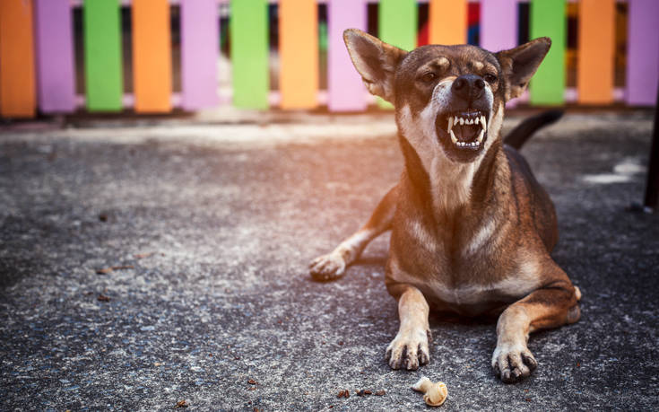 Στο νοσοκομείο τουρίστες μετά από άγρια επίθεση σκύλων