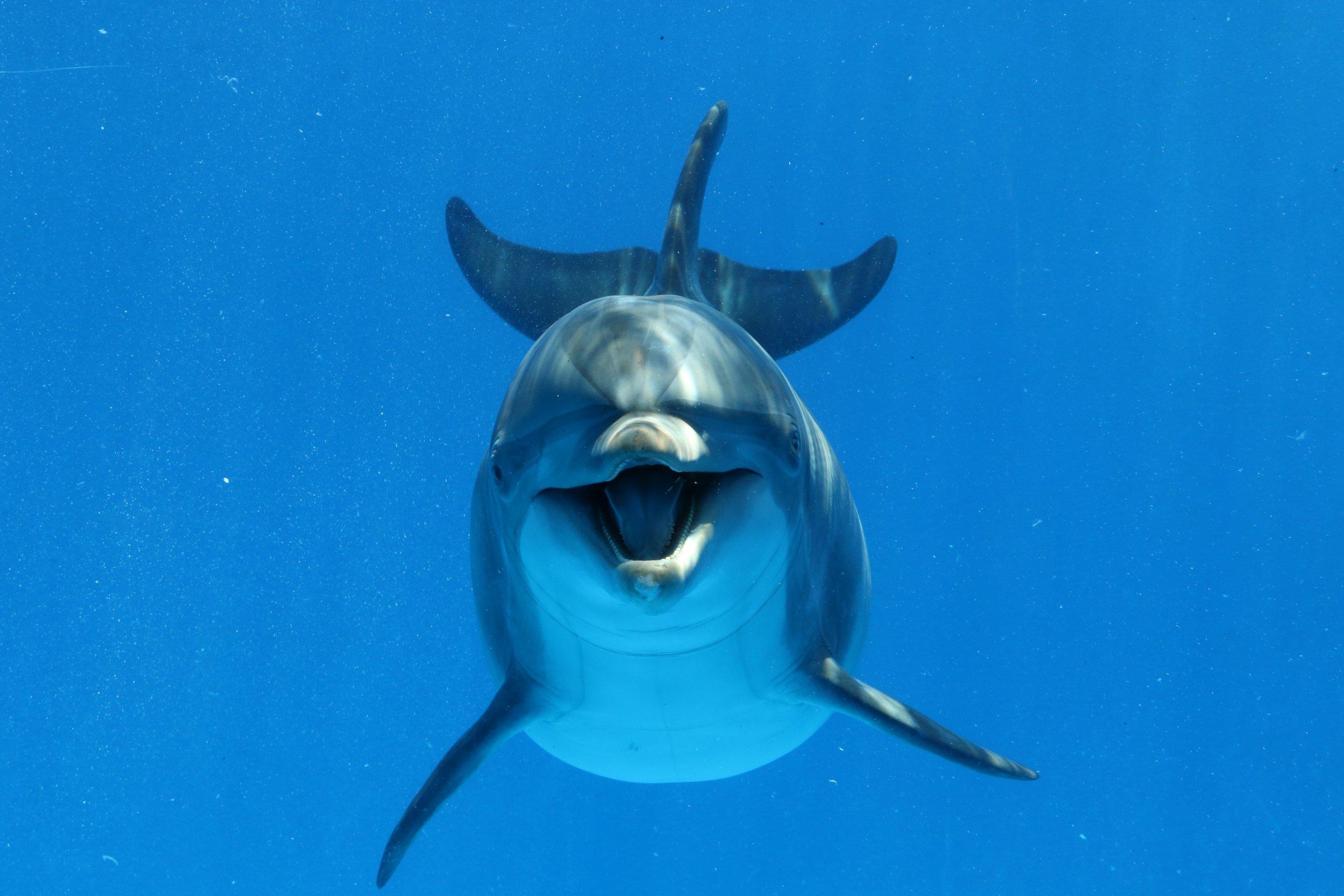 Υπέροχες εικόνες από την Κεφαλονιά: Δελφίνι κολύμπησε δίπλα σε λουόμενους (βίντεο)