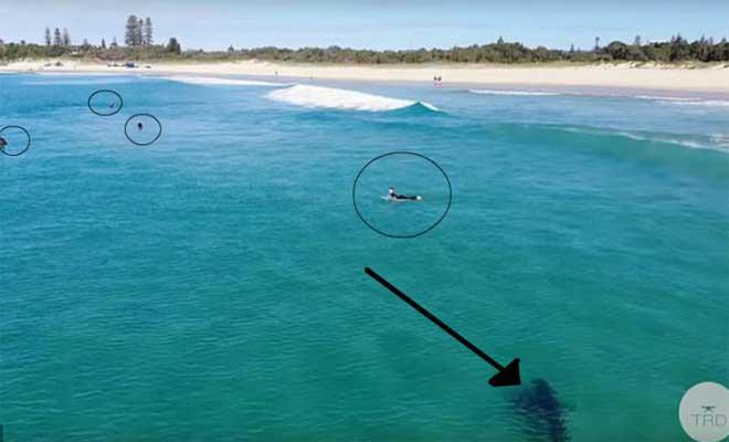 Λευκός καρχαρίας εμφανίζεται σε παραλία και οι σέρφερς δεν τον παίρνουν χαμπάρι